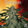 Deimos | Feminised, Auto, Indoor & Outdoor