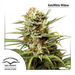 Auto White Widow | Feminised, Auto, Indoor & Outdoor