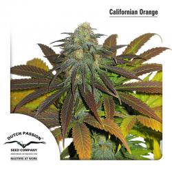 Californian Orange | Feminised, Indoor