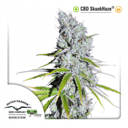 CBD SkunkHaze | Feminised, Outdoor