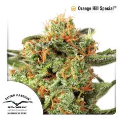 Orange Hill Special | Indoor