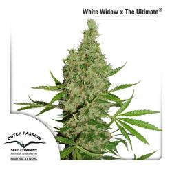 White Widow X The Ultimate | Indoor & Outdoor