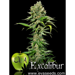 Excalibur | Feminised, Indoor & Outdoor