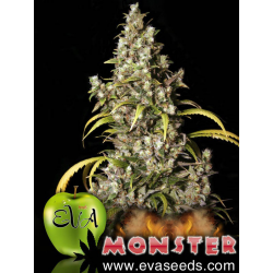 Monster | Feminised, Indoor & Outdoor