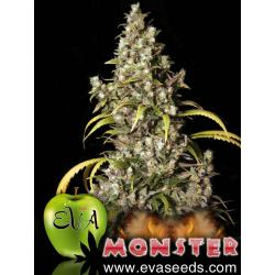 Monster | Feminised, Indoor & Outdoor