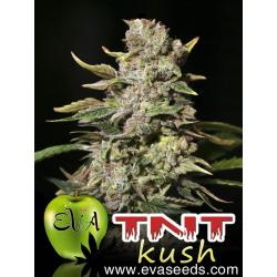 TNT Kush | Feminised, Indoor & Outdoor