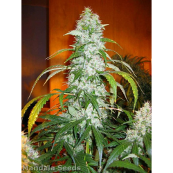 Hashberry | Indoor & Outdoor