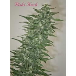 Rishi Kush   Indoor & Outdoor