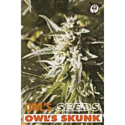 Owl's Skunk | Indoor & Outdoor