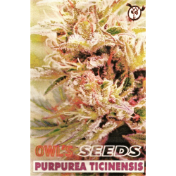 Purpurea Ticinensis | Indoor & Outdoor