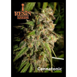 Cannatonic | Feminised, Indoor & Outdoor