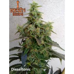 Dieseltonic   Feminised, Indoor & Outdoor