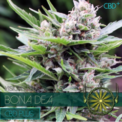 Bona Dea CBD+ | Feminised, Indoor & Outdoor