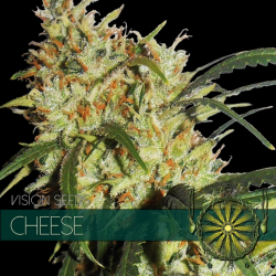 Cheese | Feminised, Indoor & Outdoor