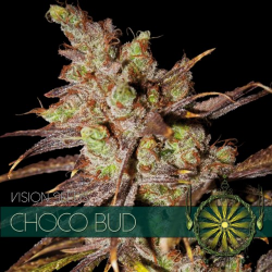 Choco Bud | Feminised, Indoor & Outdoor