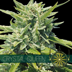 Crystal Queen | Feminised, Indoor & Outdoor
