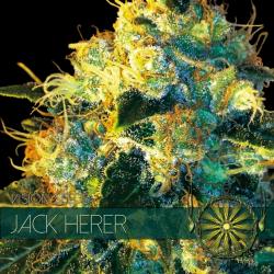 Jack Herer   Feminised, Indoor & Outdoor