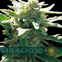 La Blanca Gold | Feminised, Indoor & Outdoor