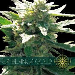 La Blanca Gold   Feminised, Indoor & Outdoor