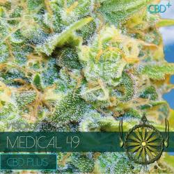 Medical 49 CBD+   Feminised, Indoor & Outdoor
