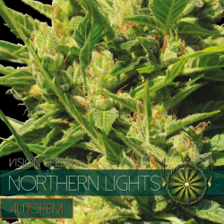 Northern Lights | Feminised, Auto, Indoor & Outdoor