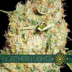 Northern Lights   Feminised, Indoor & Outdoor