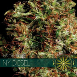NY Diesel | Feminised, Indoor & Outdoor