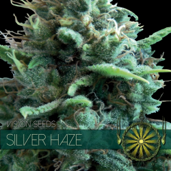 Silver Haze | Feminised, Indoor & Outdoor