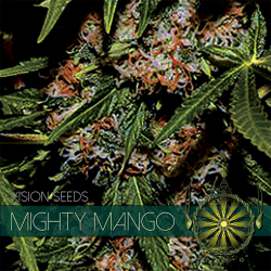 Mighty Mango Bud | Feminised, Indoor & Outdoor
