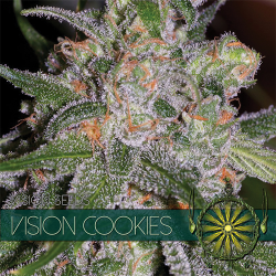 Vision Cookies | Feminised, Indoor & Outdoor