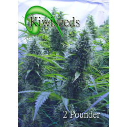 2 Pounder | Feminised, Indoor & Outdoor