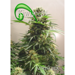 Kiwiskunk | Feminised, Indoor & Outdoor