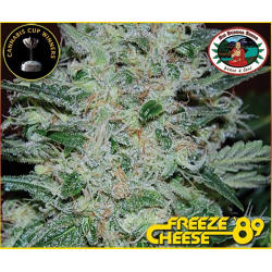 Freeze Cheese 89 | Feminised, Indoor & Outdoor