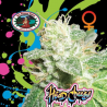Head Cheese | Feminised, Indoor & Outdoor