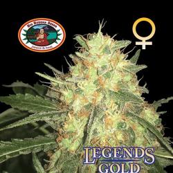 Legends Gold | Feminised, Indoor & Outdoor