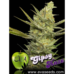 Gipsy Haze | Feminised, Indoor & Outdoor