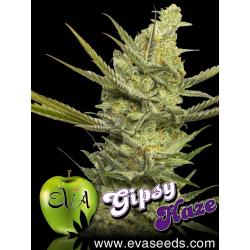 Gipsy Haze | Feminised, Indoor & Outdoor