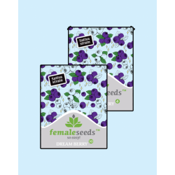 Dream Berry | Feminised, Indoor & Outdoor