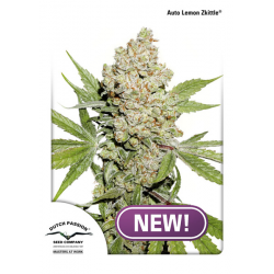 Auto Lemon Kix | Feminised, Auto, Indoor & Outdoor