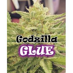 Godzilla Glue | Feminised, Indoor & Outdoor