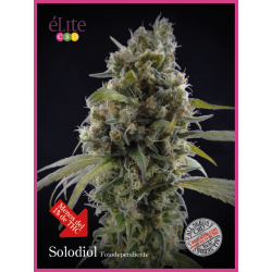 Solodiol CBD | Feminised, Indoor & Outdoor