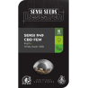 Sensi Research 49 CBD | Feminised, Indoor & Outdoor
