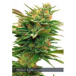 Nicole x OG   Feminised, Indoor & Outdoor