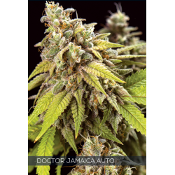 Auto Doctor Jamaica | Feminised, Auto, Indoor & Outdoor