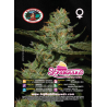 Strawnana Sundae | Feminised, Indoor & Outdoor