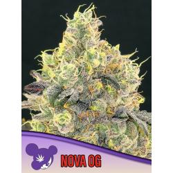 Nova OG | Feminised, Indoor & Outdoor