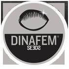 dinafem.org