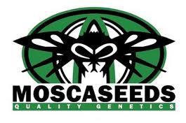 moscaseeds.com