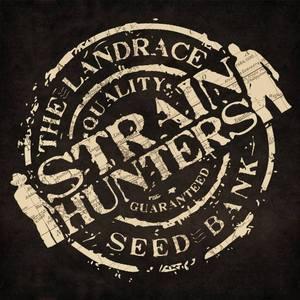 strainhunters.com